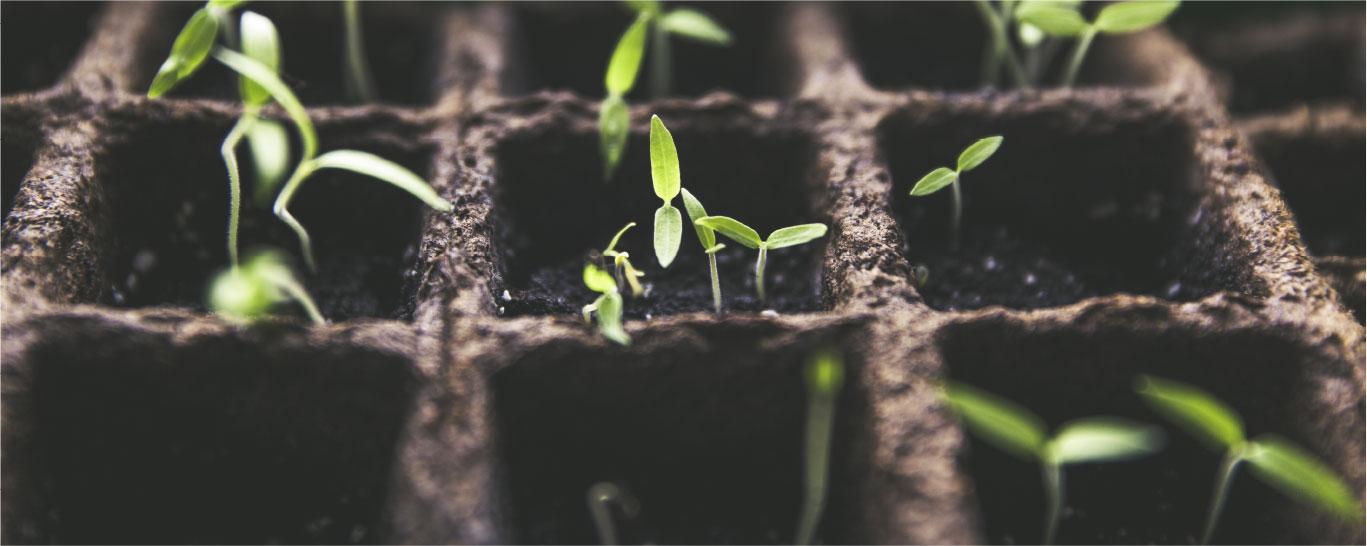 Progettazione di vivai per la produzione di piante
